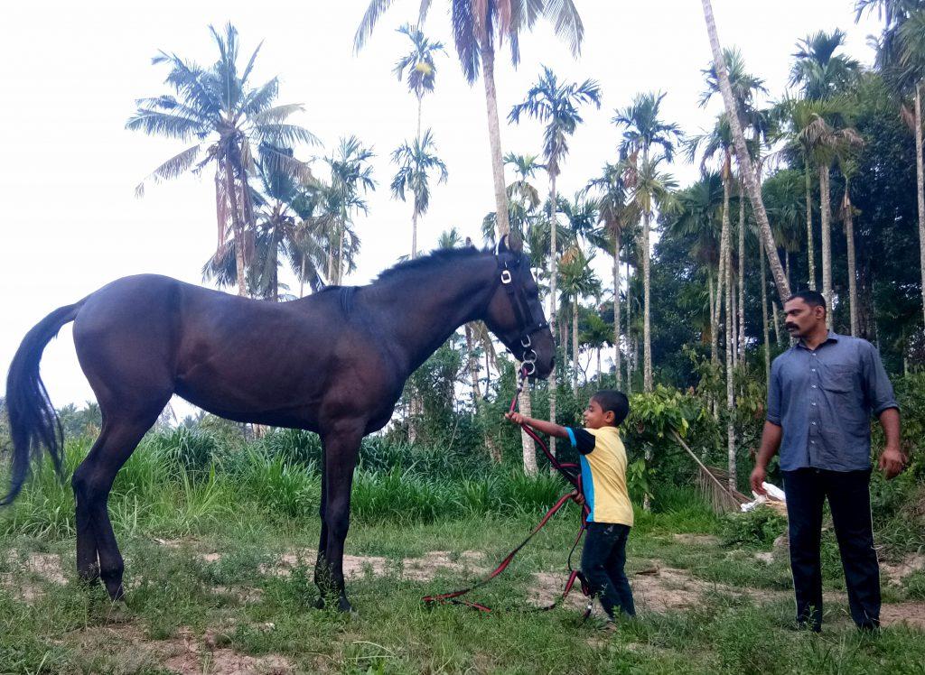 horse riding school Kerala